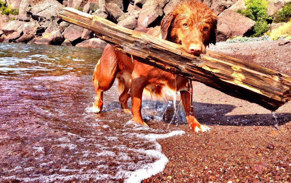 Frøya elsker og bade (foto Jessah Tembrevilla Hagen)