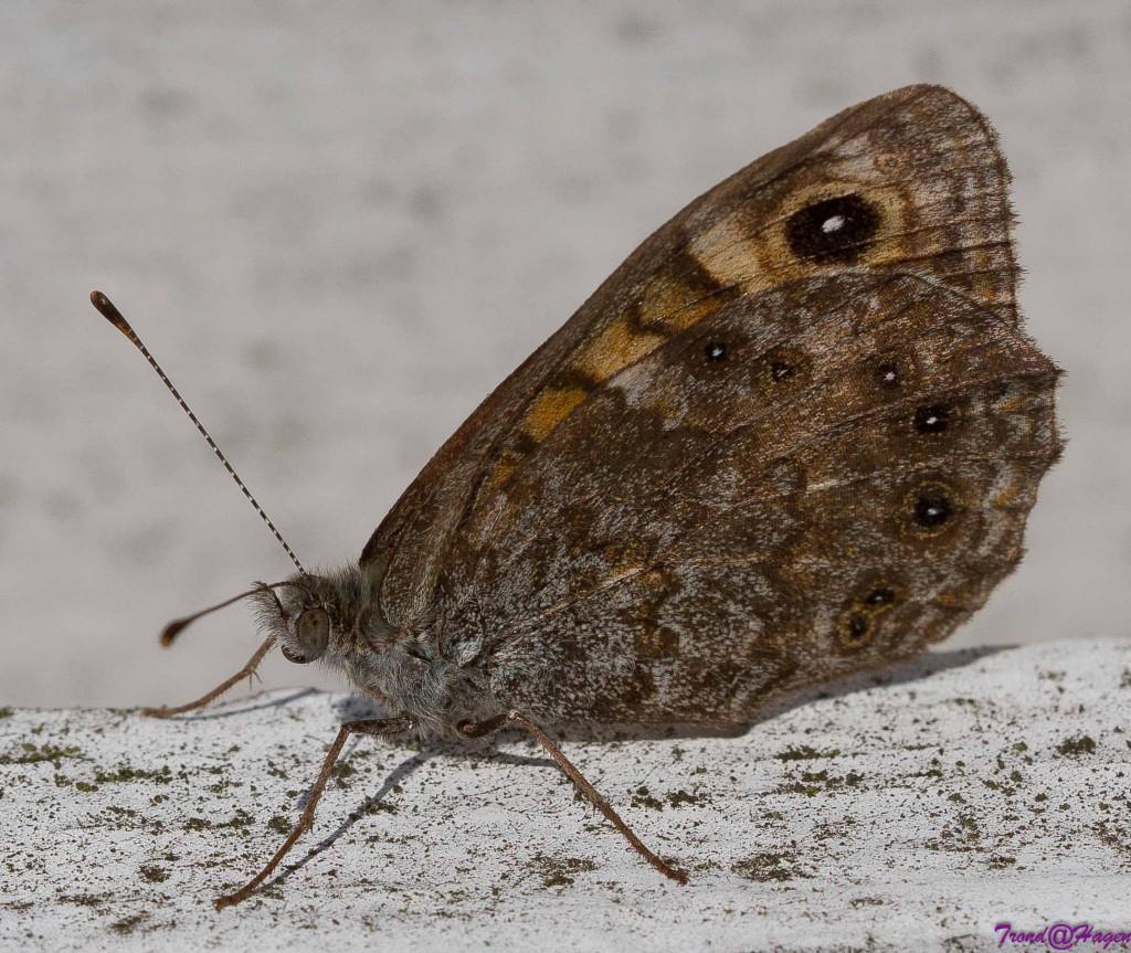 15082014macro innsekter-IMG_7430