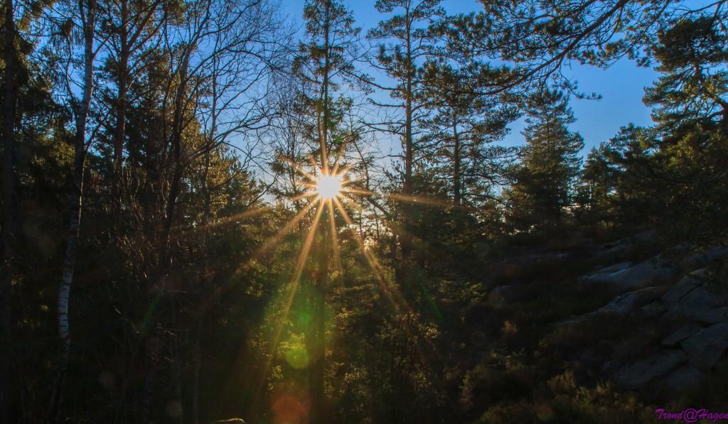 Vintersol i skogen