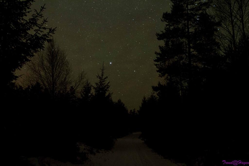 i den mørke skog.