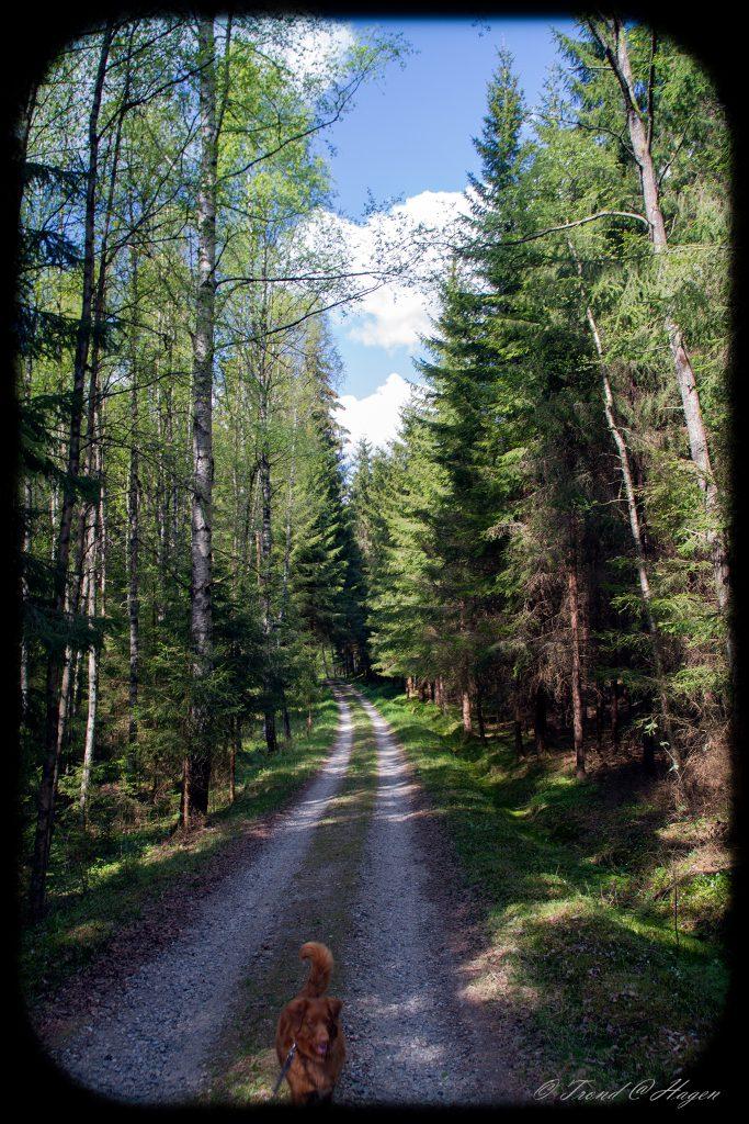 flotte skogsveier