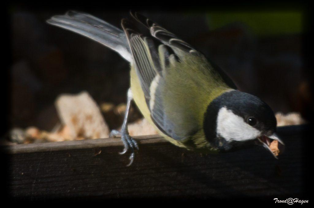 full fart på fugglebrettet igjen
