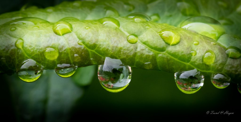 Etter regn